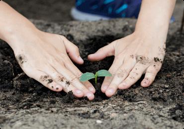 Foto de manos plantando una plántula