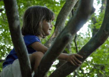 Niño en la cima del árbol admirando el paisaje
